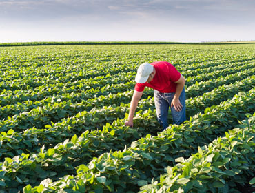 Learn Agronomy at the community colleges of Nebraska